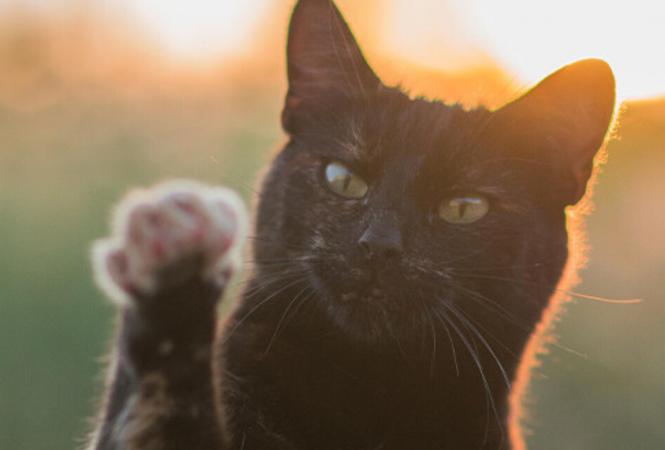 В Сети показали самую умную кошку в мире, которая попала в Книгу рекордов Гиннесса